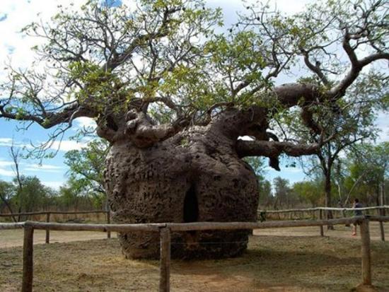 Những hình ảnh độc đáo của loài cây 11
