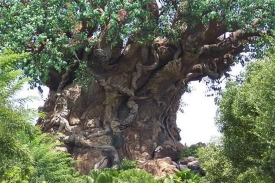 Những hình ảnh độc đáo của loài cây