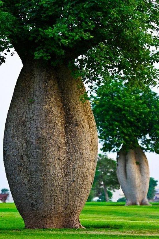 Những hình dạng độc đáo của cây