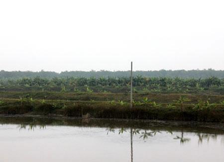 Khu đất đã được gia đình Nguyễn Văn Vươn cải tạo